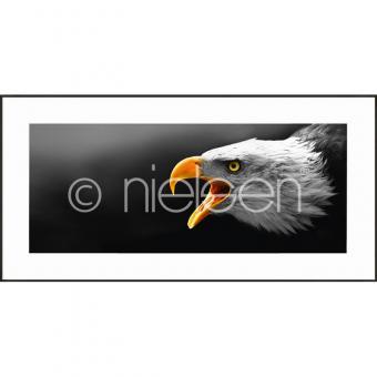 "Gerahmtes Bild ""Eagle"" mit Alurahmen C2"