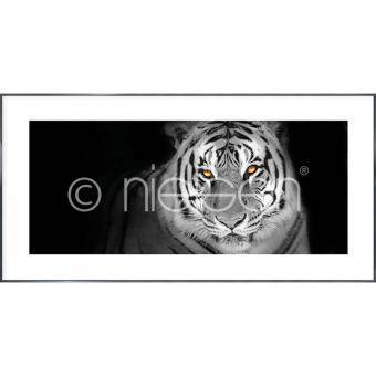 "Gerahmtes Bild ""Tiger"" mit Alurahmen Alpha"