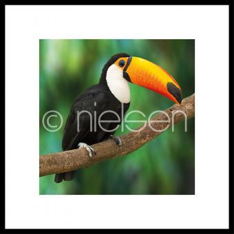"Gerahmtes Bild ""Toucan"" mit Alurahmen C2"