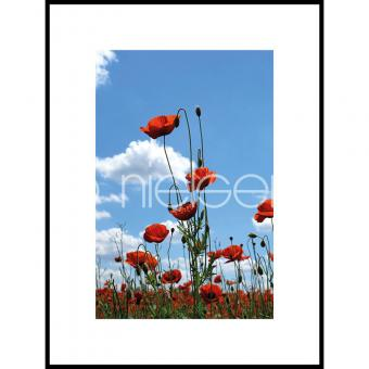 "Gerahmtes Bild ""Field of Poppy Flowers"" mit Alurahmen C2"