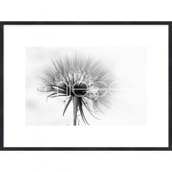 "Gerahmtes Bild ""Dandelion abstract"" mit Holzrahmen Quadrum"