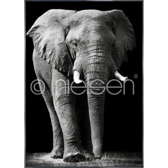 "Gerahmtes Bild ""Elephant black and white"" mit Alurahmen Alpha"